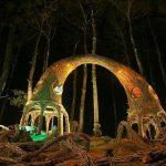 hutan-pinus-pengger-3